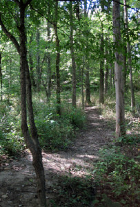 Flatwoods Park Woods Trail