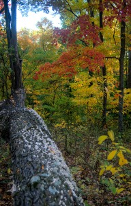 The loop trail at Hitz-Rhodehamel is a great way to enjoy the fall colors without the crowds
