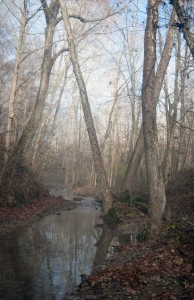 The west side of the Yellowwood Lake Trail crosses many small, tranquil ravines