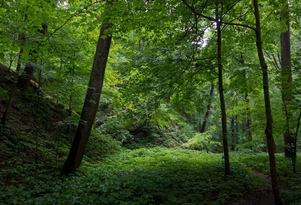 Tall Timbers Trail