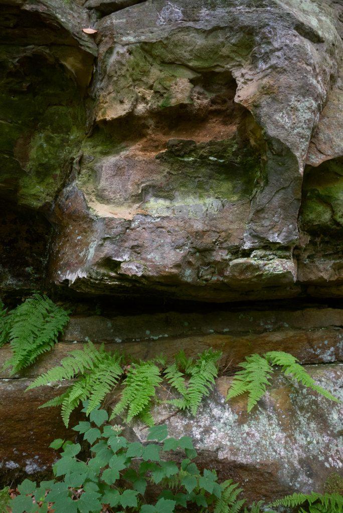 Ferns at Green's Bluff