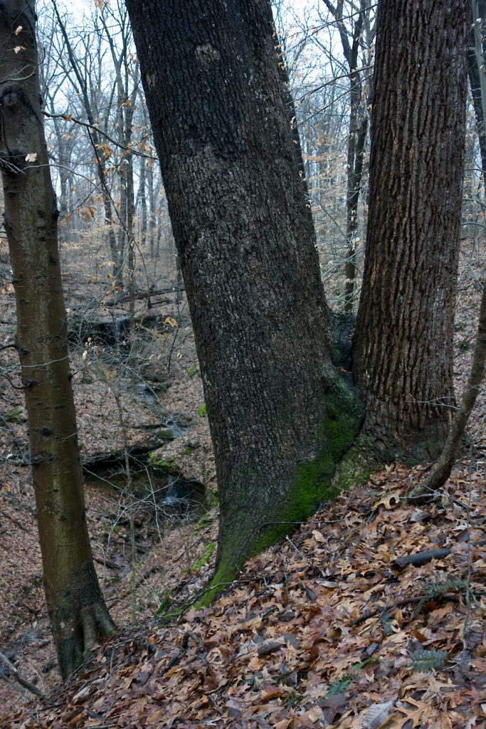 202002_Cagles_Mill_2_Fused_Trees_and_Falls_DSC9553