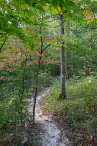 Raccoon Woods Trail in early fall