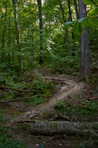 Raccoon Woods Trail stream crossing