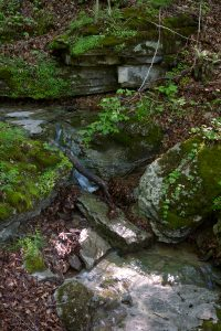 Stream flowing over rocks on the Welch Woods Trail