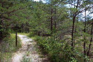 Cagles Mill Dam Trail