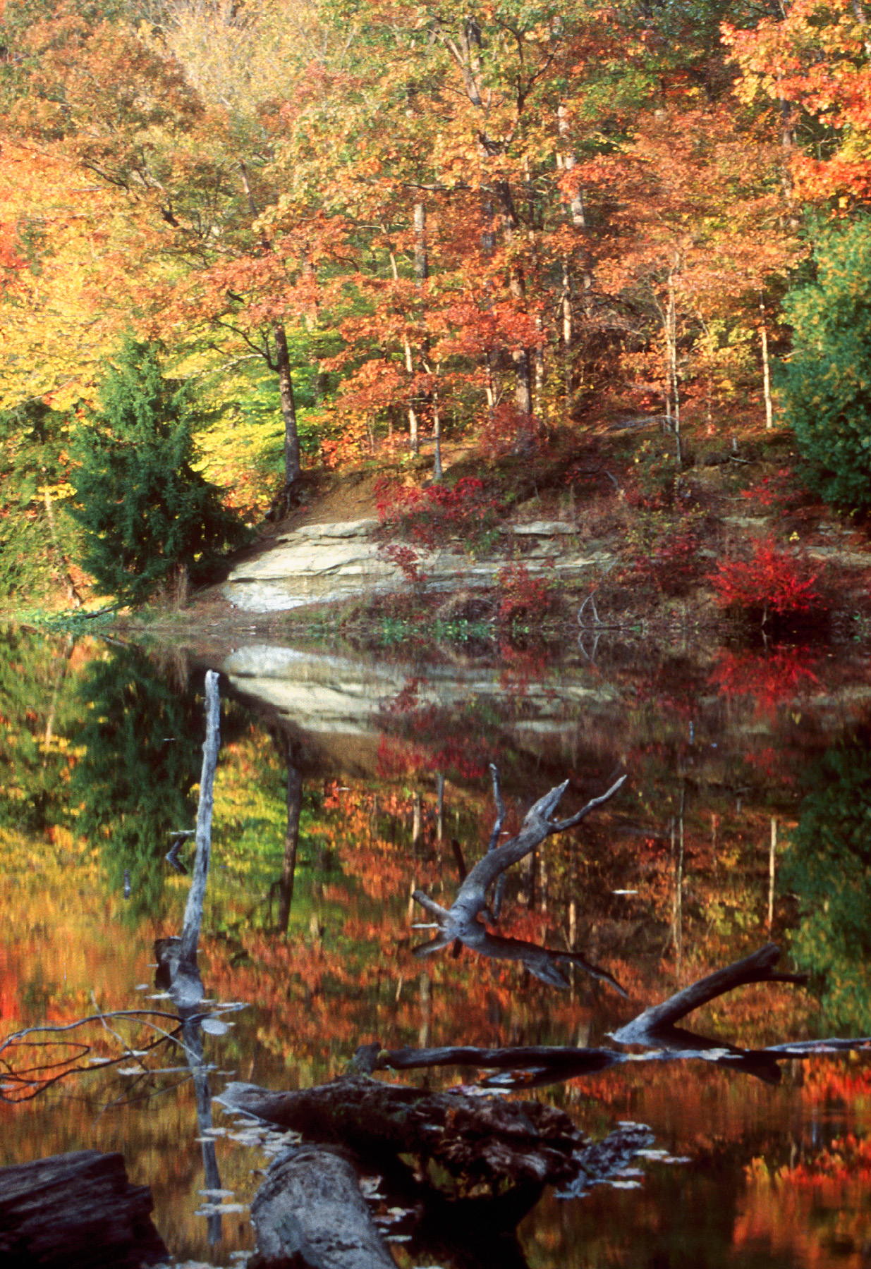 Morgan-Monroe State Forest | Hoosier Hikers Council