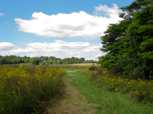 Flatwoods Mowed Perimeter Trail
