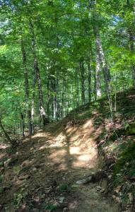 Ascent on the Hitz-Rhodehamel Trail