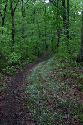 Nebo Ridge Trail Bluets