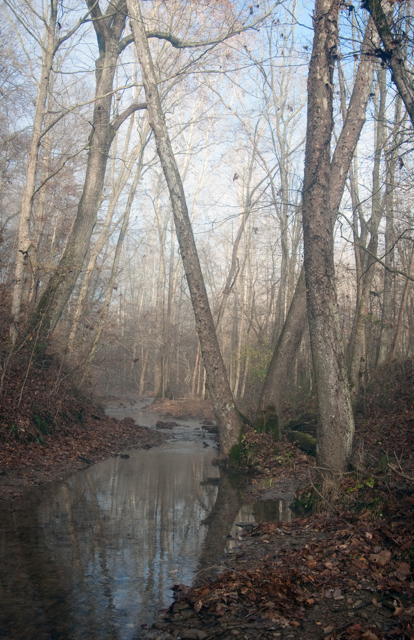 Yellowwood State Forest Trails | Hoosier Hikers Council